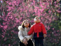 寒冬让早樱延迟至今方醒,这才是上海樱花季的正常打开方式?