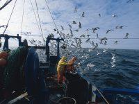 上海首创海洋渔业捕捞气象预警标准,服务效益预计可占渔民总收益的35%