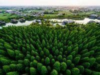 """上海这个区森林覆盖率几乎是全市平均水平两倍!如今正提升""""泼绿""""工程含金量"""